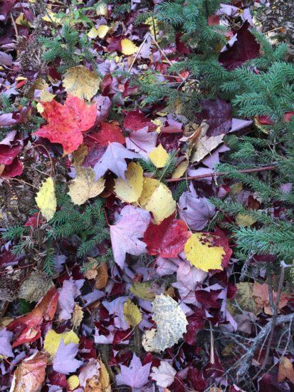 colorfall fall leaves