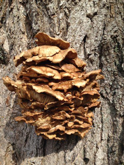 mushroom on tree bark